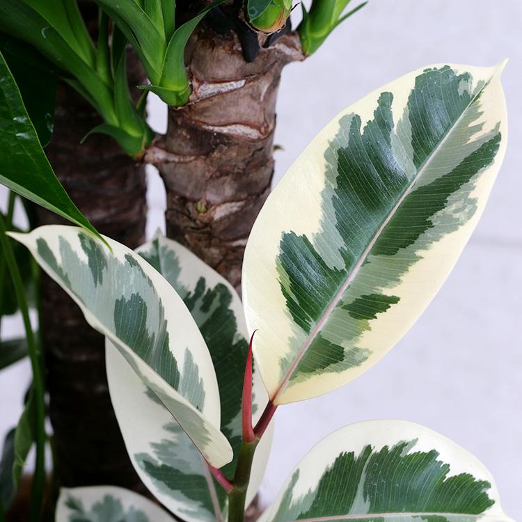 ユッカ(青年の木)の寄せ植え 拡大写真