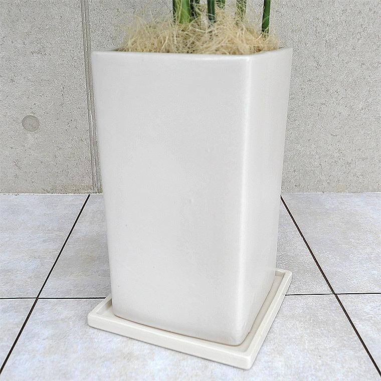 コウセイチャメドレア 陶器鉢の写真(マットシリーズ/プリズム)
