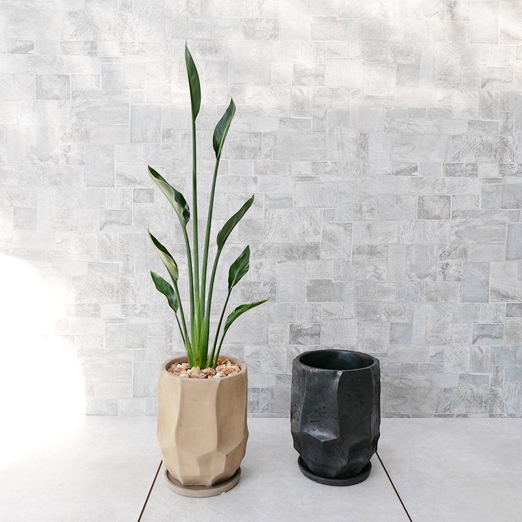 ストレチア・ノンリーフ 陶器鉢植え(カルストシリーズ/トール)