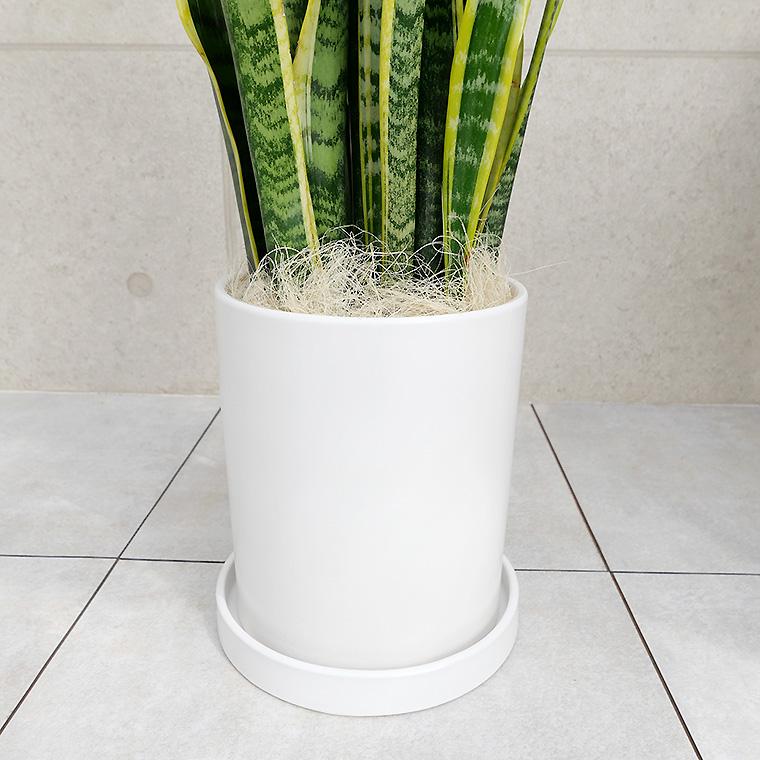 陶器鉢植・Mサイズ(マットシリーズ/シリンダー)の写真