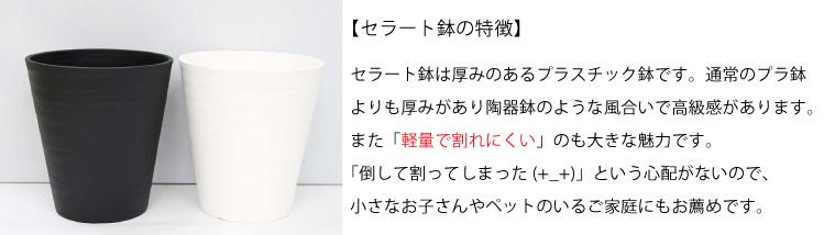 セラート鉢の紹介