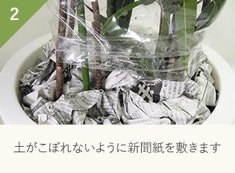 土がこぼれないように新聞紙を敷きます