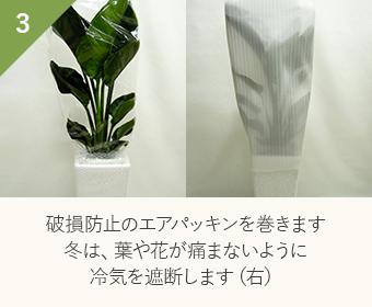 破損防止のエアパッキンを巻きます 冬は、葉や花が痛まないように冷気を遮断します(右)