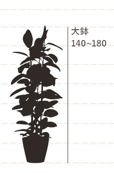 大鉢(高さ:140~180cm)
