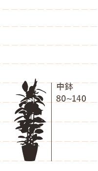 中鉢(高さ:80~140cm)