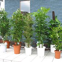 常時、100種類以上の品揃えの観葉植物