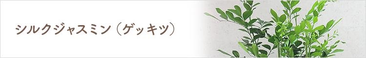 シルクジャスミン(ゲッキッ)